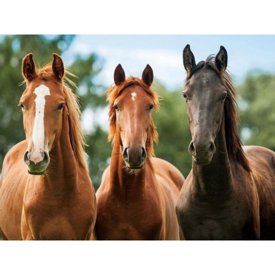 Placemat drie paarden 3D 30 x 40 cm
