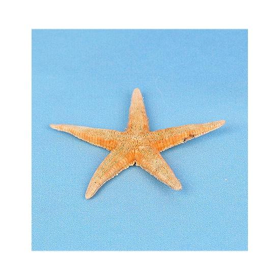 10x stuks decoratie zeesterren van 7 cm
