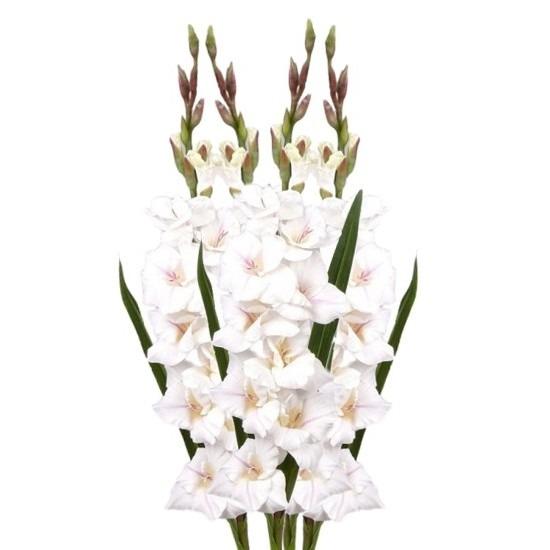 4x Witte gladiolen kunstbloemen takken 102 cm