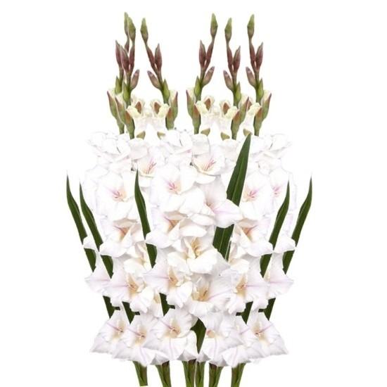 6x Witte gladiolen kunstbloemen takken 102 cm