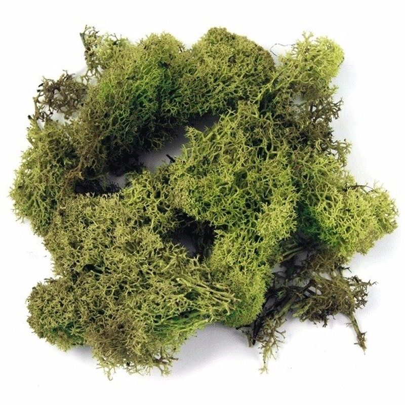 Decoratie mos lichtgroen 200 gram