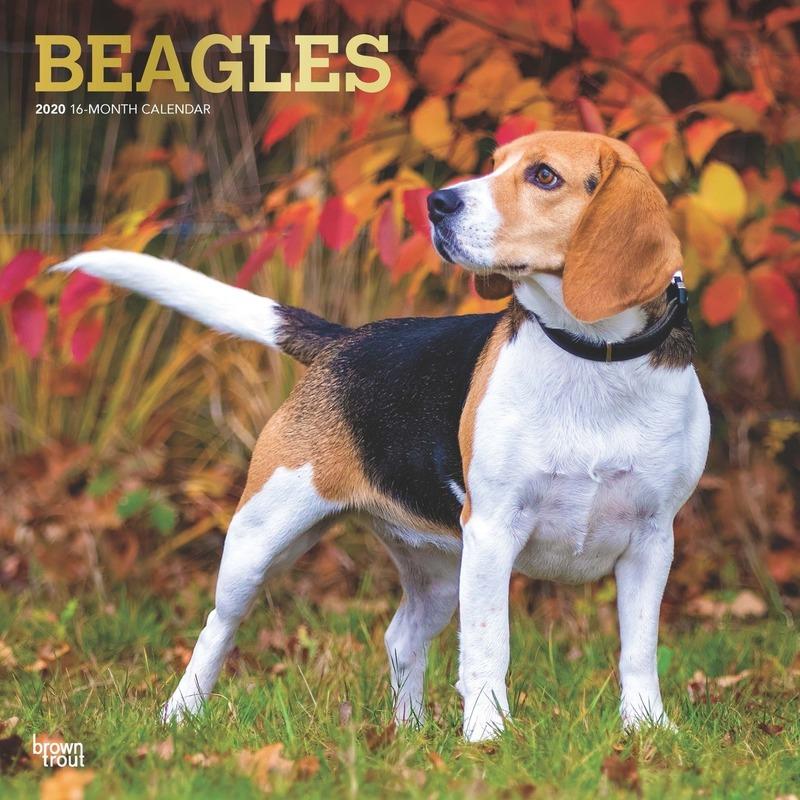 Dieren kalender 2020 Beagle honden