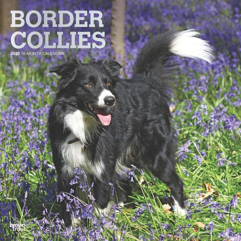 Dieren kalender 2020 Border Collie honden