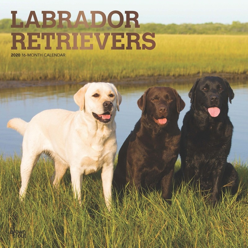 Dieren kalender 2020 Labrador Retriever honden