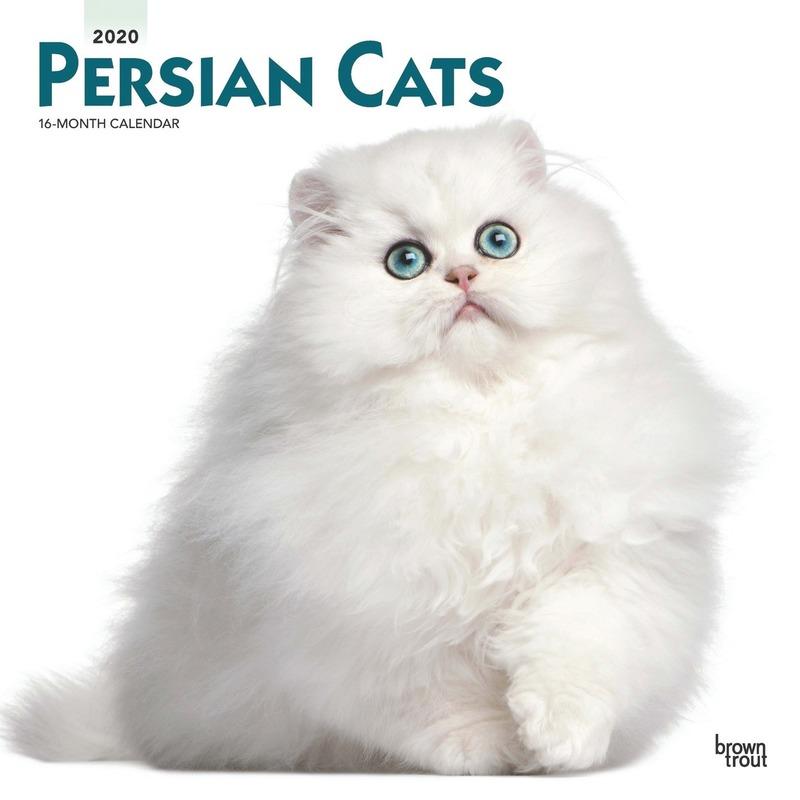Dieren kalender 2020 Perzische katten/poezen