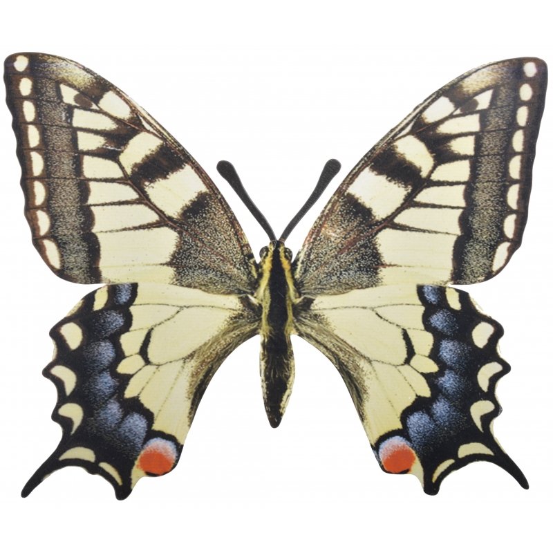 Metalen vlinder koninginnenpage 25x20 cm