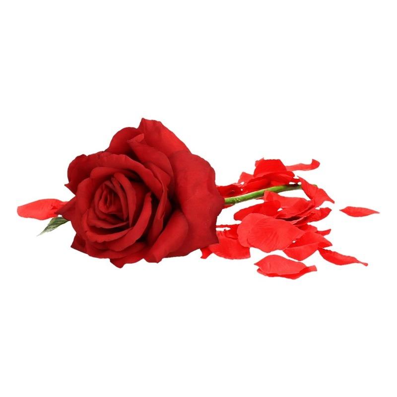 Valentijnscadeau rode roos 31 cm met rozenblaadjes