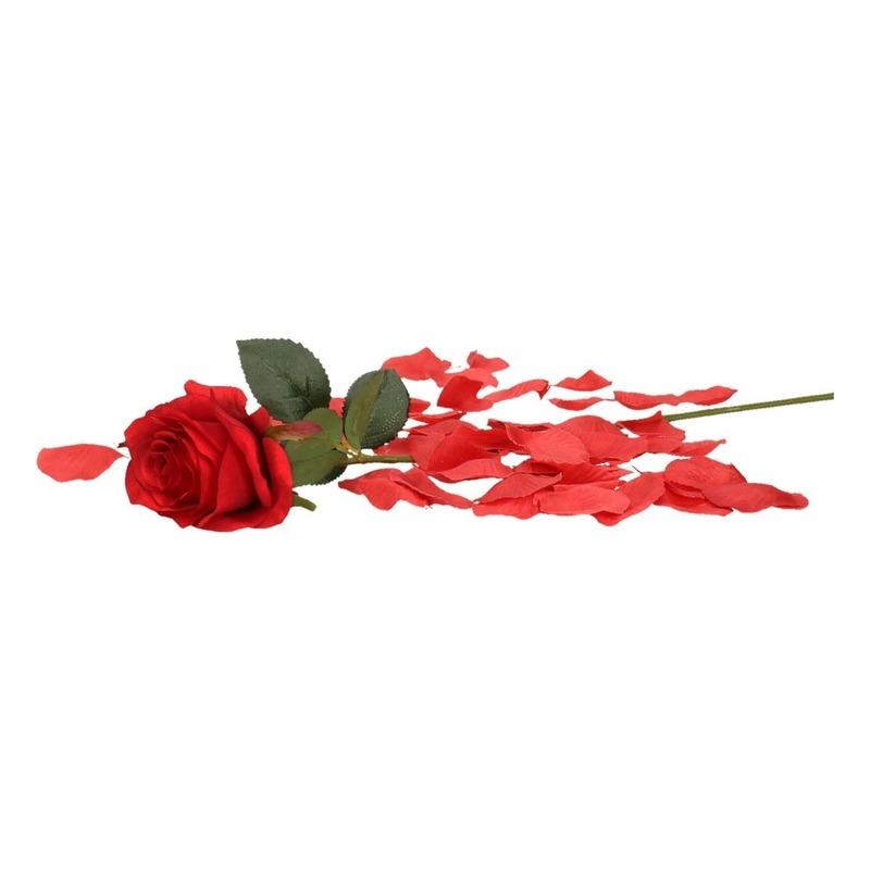 Valentijnscadeau rode roos 45 cm met rozenblaadjes